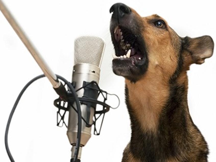 ¿Qué dice tu perro con el ladrido?
